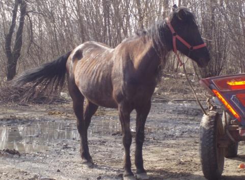 stap voor stap beslaan paard